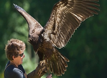 The International Center For Birds Of Prey